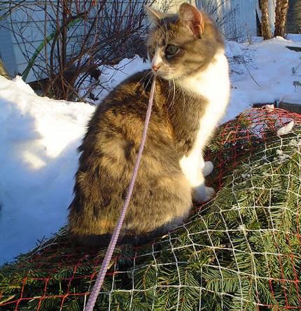 Perierga.gr - Γάτες που κλέβουν τις εντυπώσεις δίπλα σε Χριστουγεννιάτικα δέντρα!