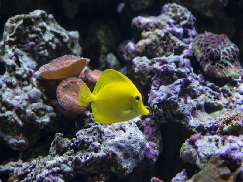 Perierga.gr - Εντυπωσιακά θαλάσσια πλάσματα που ζουν σε υφάλους