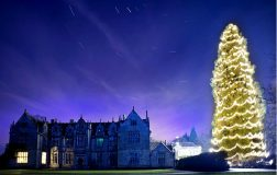 Perierga.gr-Το Χριστουγεννιάτικο δέντρο που έχει ύψος όσο 3 διπλά λεωφορεία