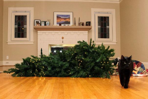 Perierga.gr - Γάτες και σκύλοι που...καταστρέφουν τα Χριστούγεννα!