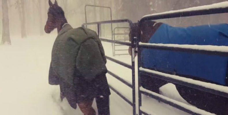 Perierga.gr - Η απίστευτη αντίδραση δυο αλόγων όταν περπατούν στο χιόνι