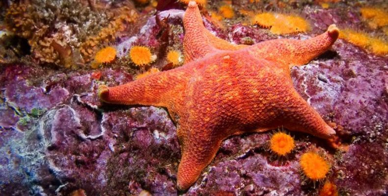 Perierga.gr - Αστερίες με παράξενη ομορφιά και εντυπωσιακά χρώματα