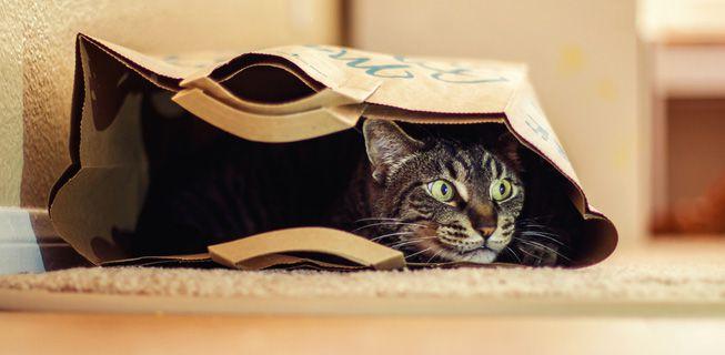 Perierga.gr - Γάτες σε παιχνιδιάρικες στιγμές με... χαρτοσακούλες