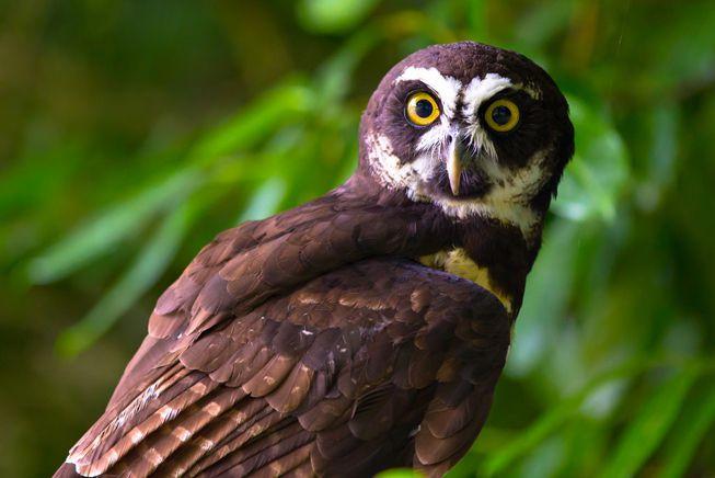 Perierga.gr - Κουκουβάγιες: σοφές και εντυπωσιακές