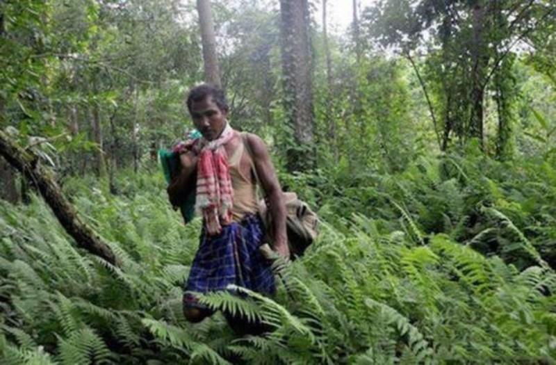Perierga.gr - Άντρας φύτεψε μόνος του δέντρα σε έκταση 1360 στρεμμάτων!