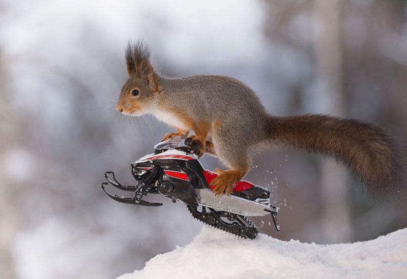 Perierga.gr - Σκίουροι επιδίδονται σε...χειμερινά σπορ!