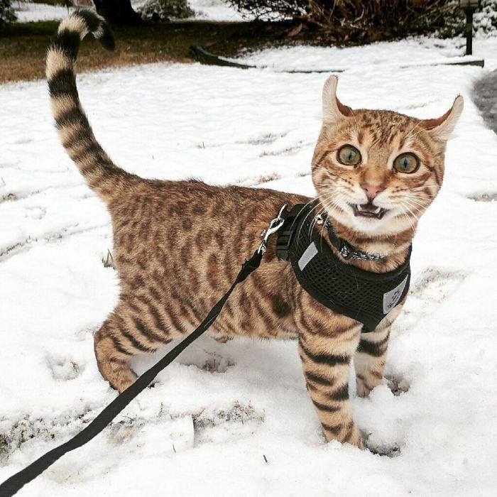 Perierga.gr - Μοναδικές αντιδράσεις ζώων που βλέπουν χιόνι για πρώτη φορά!