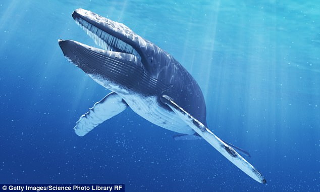 Periega.gr - Ακούστε τους παράξενους ήχους που βγάζουν οι μπλε φάλαινες