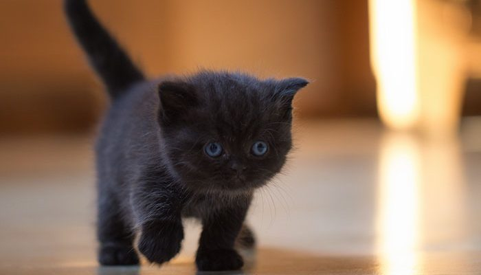 Perierga.gr - Γυναίκα και γάτα έχουν αναπτύξει μια ιδιαίτερη χειραψία!