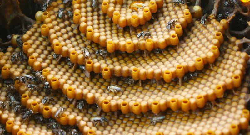Perierga.gr - Μέλισσες δημιουργούν κυψέλες με περίτεχνα σχέδια για... άγνωστο λόγο!