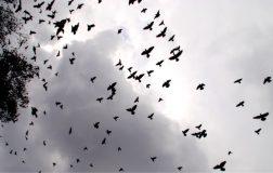 Perierga.gr - Ο δρόμος που πετούν πουλιά κατά χιλιάδες!