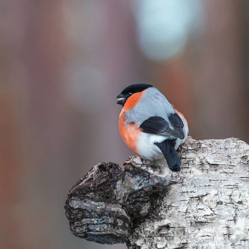 Perierga.gr - Τα πολύχρωμα και παράξενα πτηνά της Φινλανδίας