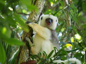 10 είδη ζώων που είναι υπό εξαφάνιση