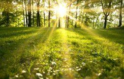 Perierga.gr - Η άνοιξη έρχεται όλο και πιο πρόωρα στον πλανήτη μας