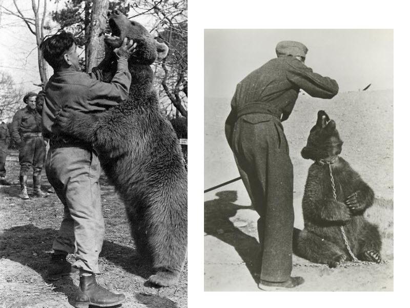 Perierga.gr - Μια αρκούδα που είχε αξίωμα στο στρατό!