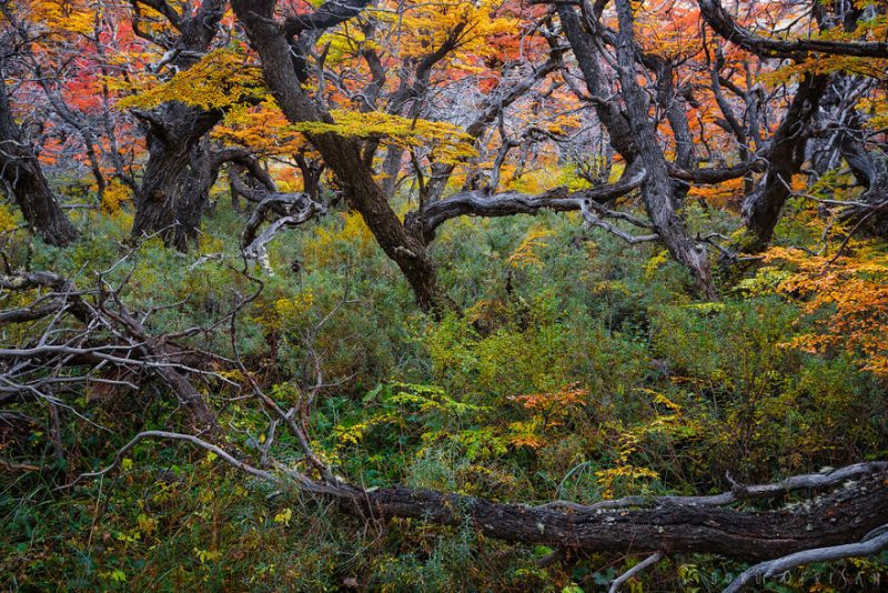 Perierga.gr - Παταγονία: Το τελευταίο σημείο της γης γεμάτο χρώματα