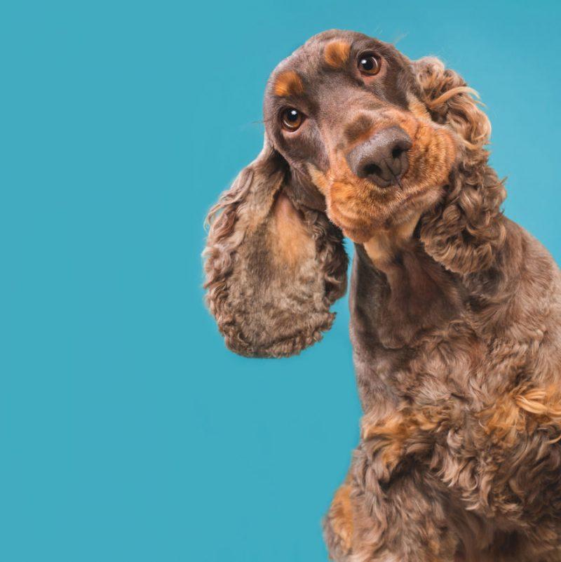 Perierga.gr - Χαριτωμένα σκυλιά ποζάρουν με... νάζι στο φακό