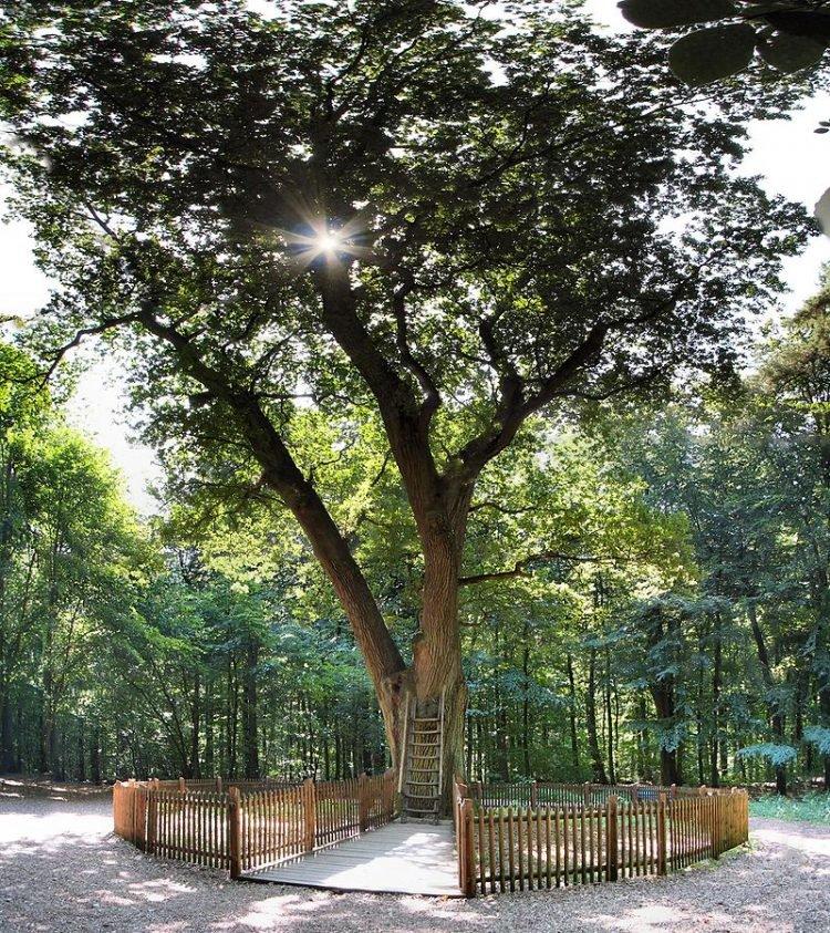 Perierga.gr - Το δέντρο της Αγάπης στη Γερμανία
