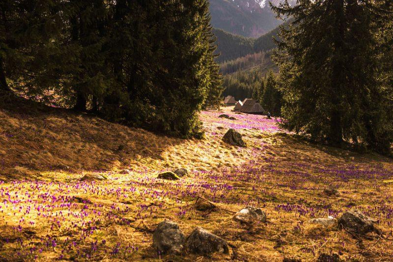 Perierga.gr - Η άνοιξη στα βουνά της Σλοβακίας