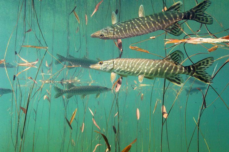 Pertierga.gr - Η μαγεία του θαλάσσιου κόσμου σε υποβρύχιες λήψεις