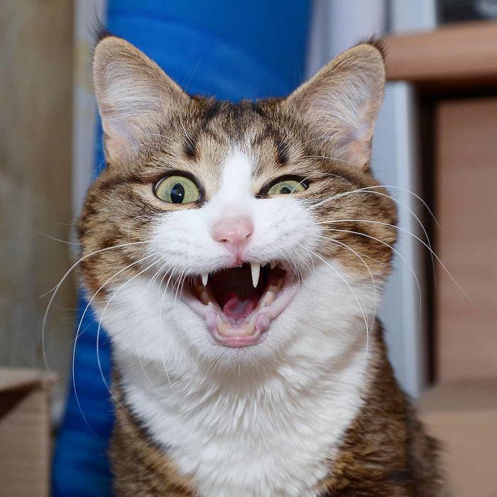 Perierga.gr - Ξεκαρδιστικές εκφράσεις μιας γάτας μπροστά στο φακό