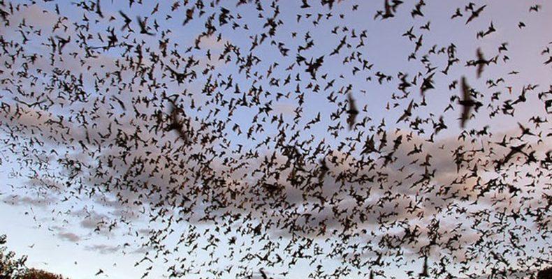 "Perierga.gr - Το ""ηφαίστειο"" των νυχτερίδων στο Μεξικό"