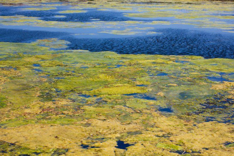 Perierga.gr - Γιατί κινδυνεύει να μετατραπεί σε βάλτο η λίμνη Βαϊκάλη;