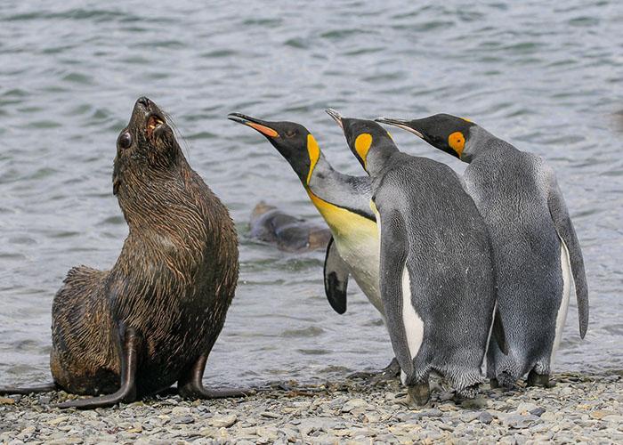 Perierga.gr - Οι... αναπάντεχες συμμετοχές στο διαγωνισμό κωμικής φωτογραφίας άγριων ζώων!