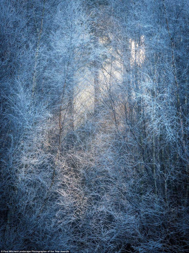 Perierga.gr - Δάση βγαλμένα από σελίδες παραμυθιού...