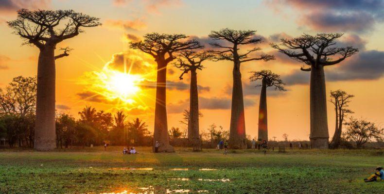 Perierga.gr - Γιατί πεθαίνουν τα παλαιότερα μπαομπάμπ της Αφρικής
