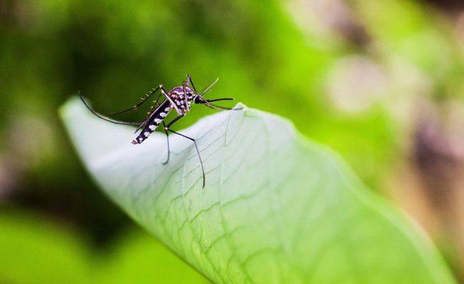 Perierga.gr - Πώς να διώξετε τα κουνούπια με φυσικό τρόπο