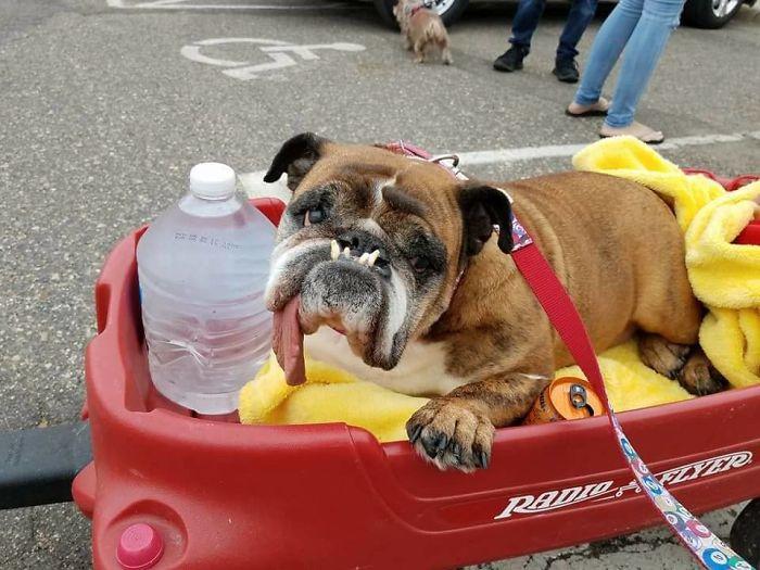 Perierga.gr - Ο πιο... άσχημος σκύλος για το 2018