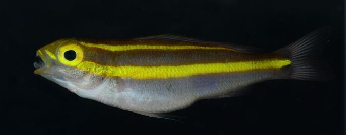 Perierga.gr - Θαλάσσια πλάσματα που φωσφορίζουν!
