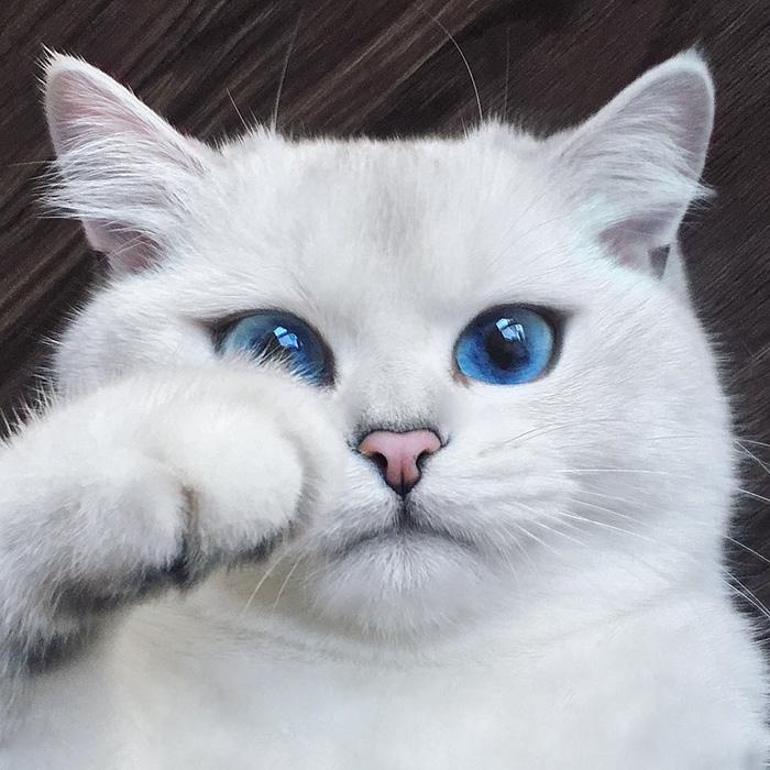 Perierga.gr - Μια γάτα με εντυπωσιακά μπλε μάτια!