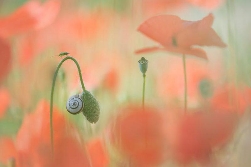 Perierga.gr - Οι νικητές του διαγωνισμού Garden Photographer of the Year
