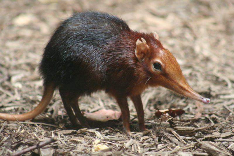 Perierga.gr - Το μοναδικό ζώο που τρώει πικάντικες και καυτερές τροφές