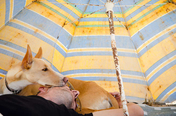 """Perierga.gr - Οι φωτογραφίες που νίκησαν στο διαγωνισμό """"Dog of the Year"""""""