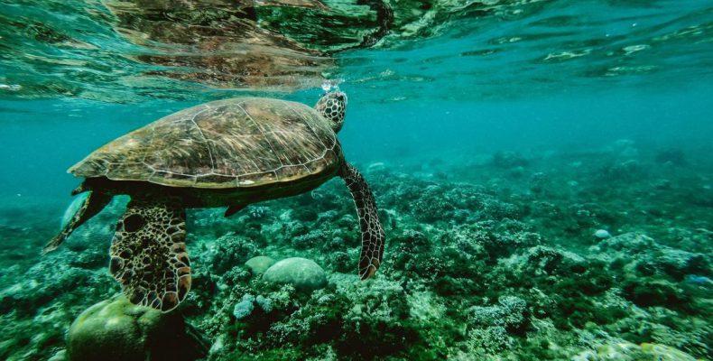 Perierga.gr - Μόλις το 13% των ωκεανών παραμένει ανέγγιχτο από τους ανθρώπους