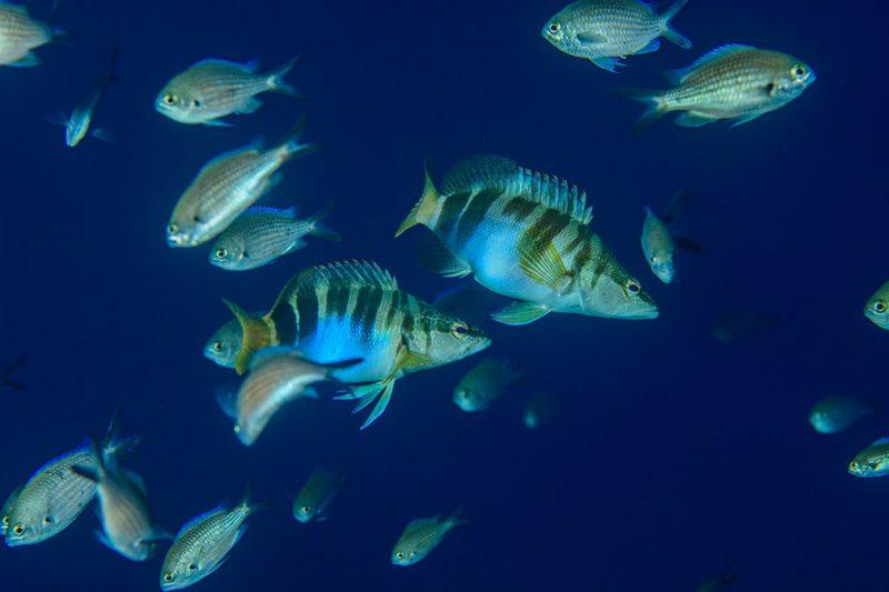 Perierga.gr - Εντυπωσιακοί κοραλλιογενείς ύφαλοι και θαλάσσια πλάσματα εντοπίστηκαν στο βυθό της Σικελίας