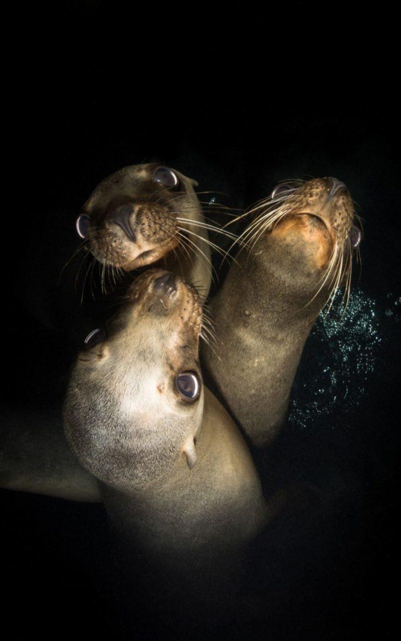 Οι καλύτερες υποβρύχιες φωτογραφίες για το 2018