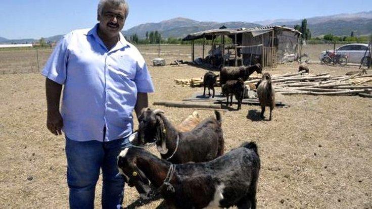 Perierga.gr - Τουρκική ομάδα ποδοσφαίρου πούλησε παίκτες για να αγοράσει κατσίκια!