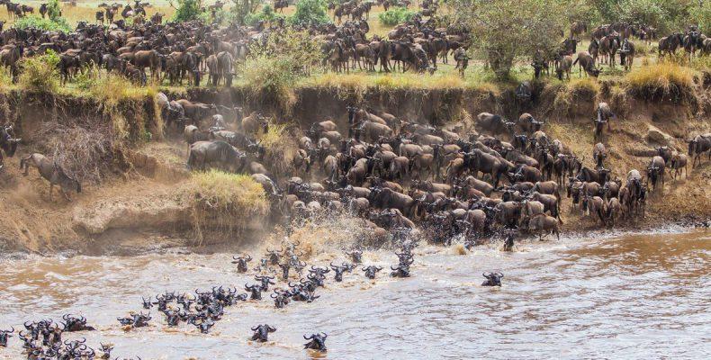 Perierga.gr - Η μεγαλειώδης μετανάστευση των άγριων ζώων στην Κένυα