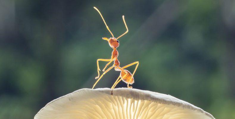 Perierga.gr - Απίστευτα χαρακτηριστικά και ιδιότητες που έχουν τα μυρμήγκια