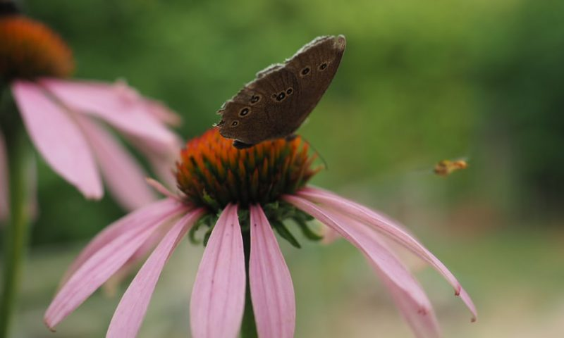 Perierga.gr - Εντυπωσιακές και όμορφες πεταλούδες
