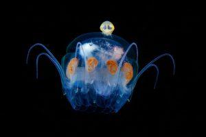 Perierga.gr - Θαλάσσια πλάσματα στο σκοτάδι...