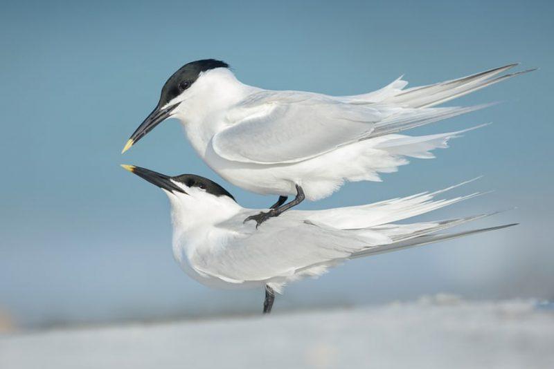 Φωτογραφίες πτηνών για βραβείο!