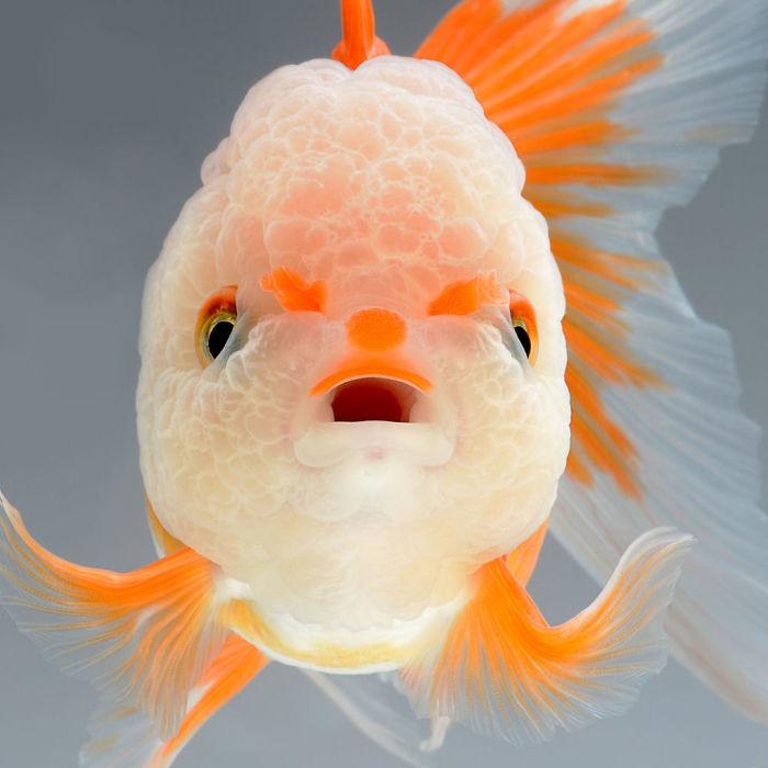 Perierga.gr - Η... κομψότητα των πολύχρωμων ψαριών μέσα από το φακό φωτογράφου