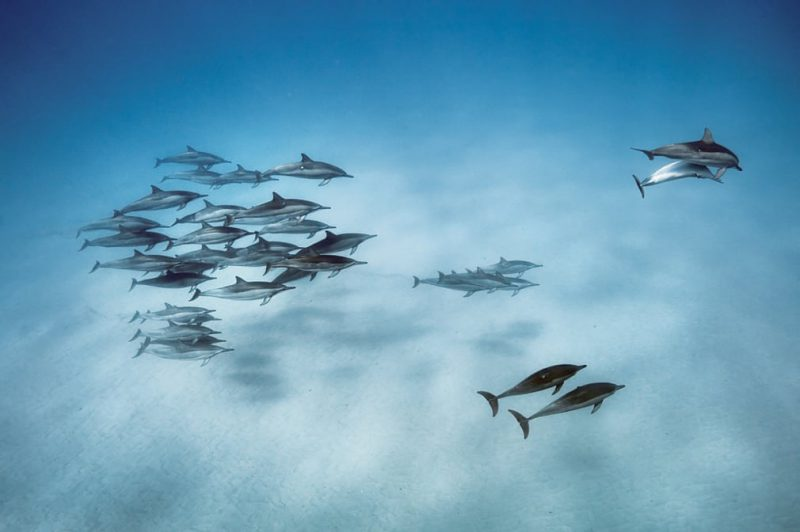 Perierga.gr - Οι καλύτερες φωτογραφίες άγριας ζωής του πλανήτη