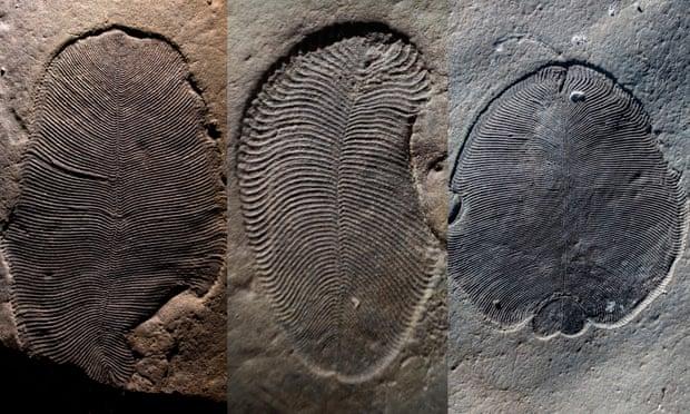 Perierga.gr - Απολιθώματα 558 εκατομμυρίων ετών ανήκουν στο παλαιότερο γνωστό ζώο