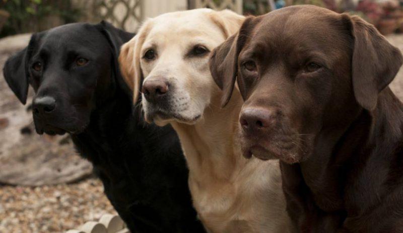Perierga.gr - Οι πιο έξυπνες ράτσες σκύλων